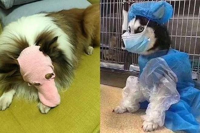 маска для собаки.jpg